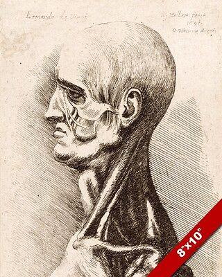 W HOLLAR AFTER LEONARDO DA VINCI SKETCH HUMAN HEAD ANATOMY REAL CANVASART PRINT