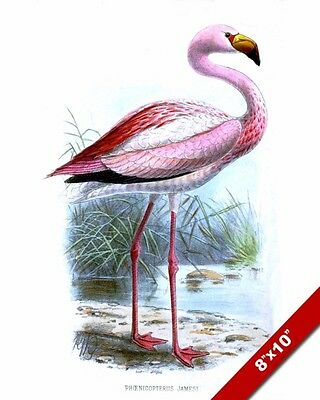 PINK FLAMINGO BIRD VINTAGE IN WILD DRAWING PAINTING ART REAL CANVAS GICLEEPRINT