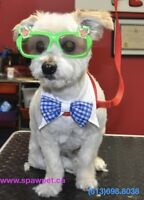 OTTAWA DOG AND CAT GROOMING - CERTIFIED PROFESSIONAL GROOMER