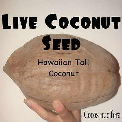 Hawaiian Coconut  Seed Cocos Nucifera Tropical Palm Tree Lyd Disease Free