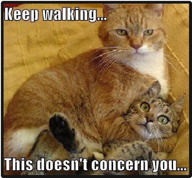 Funny Cat Humor Keep Walking Refrigerator Magnet