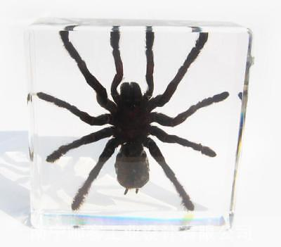 insect Spider Paperweight Specimen Taxidermy Paperweight embedded Collection, used for sale  Shipping to Canada