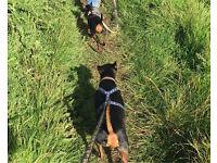 Needed: dog walker/sitter