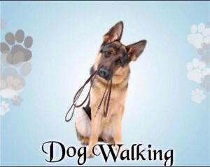 Experienced And Reliable Dog Walker