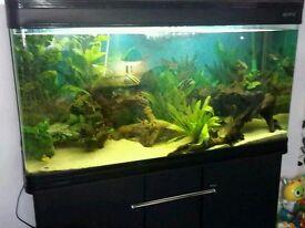 Tropical fish tank 4ft