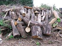 Dry logs free for collection