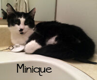 Minique: A bit shy and quite petite - she's a sweetheart!