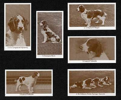 WELSH SPRINGER SPANIEL DOGS OF YESTERYEAR SET OF 6 NAMED DOG PHOTO TRADE CARDS
