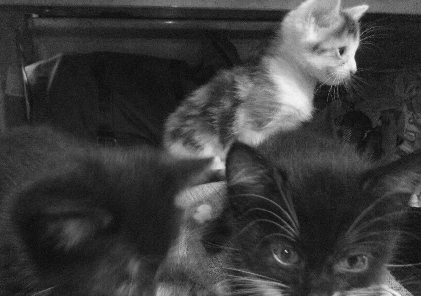1 left now - A litter of kittens - I can bring them to yo