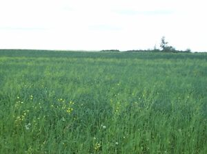 Land For Sale in Lamont (160 acres)