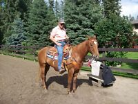 4 yr old Papered QH Gelding - Started Head Horse for Team Roping