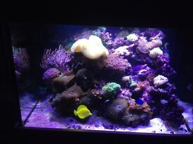 Large 300 litre marine tank with lots of live rocks and corals