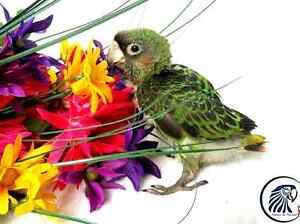 ❤❤ New Baby Parrot ★ Nouveau bébé Perroquet ❤❤