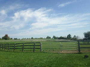 Boarding at Rougemont/four winds equestrian Cambridge Kitchener Area image 6