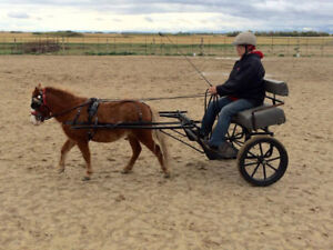 Driving training for Miniature Horses
