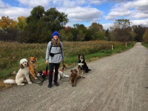 Reliable Dog Walking & Pet Care