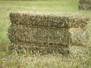 SQUARE HAY BALE NEEDED