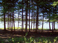 Hear the loons, not motors, lakefront Lake Nebo (Lowered price)