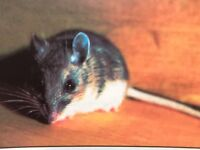 Mice and Rat control At Its Best
