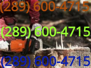 Tree and Stump removal. GTA. ☎ Text Pictures to 289 600 4715.