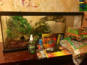 Young Adult Male Ball Python and lots of stuff **600$ Value**