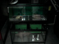 Very large reptile tank's with metal stand and heat lamps.