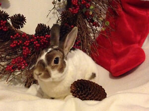 Hop for the Holidays!  Adoption Open House and Fundraiser