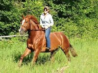Horse Training and/or Basic Riding Lessons