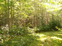 woodlot for sale