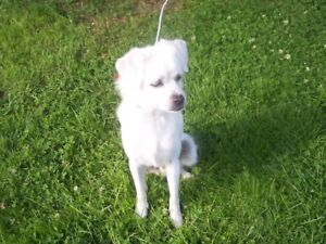 WANTED IN LIVERPOOL; A SENIORS  SMALL COMPANION  DOG