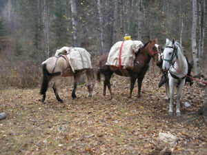 FOR SALE:EVERYTHING YOU NEED TO GO HORSE-PACKING IN  MOUNTAINS