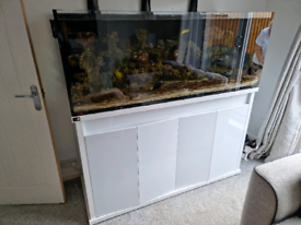 Dd reef pro 1500 ( marine fish tank )
