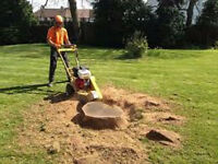 Best Rate Tree Removal, Tree Prunning, Stump Removal