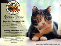 BARRHEAD ANIMAL RESCUE SOCIETY Valentine adoption Events