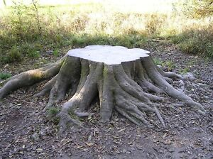 Tree Stump Grinding - Stump Removal
