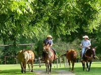 Covered Wagon B&B Getaway for Adults - Texas Longhorn Ranch