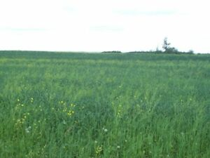 Land For Sale in Lamont