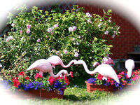 Flamingos at Large!