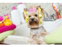 Mobile Dog Grooming - The Poochie Palace