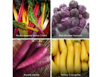 Funky Veg Kit - grow your own veg. 4 seed packs inc purple carrots, stripy tomatoes