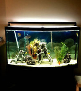 100 Gallon bow front fish tank with stand