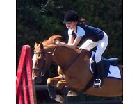 Competent rider looking for horse share