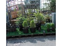Plants Planters Pots etc to clear - MANCHESTER