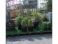 Plants Planters Pots etc to clear - MANCHESTER