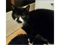 Fusspot for Adoption: Mr Mooney Needs TLC