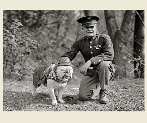 First Marine Corps Mascot Dog PHOTO Sgt Major Jiggs, Bulldog USMC WWI 1925