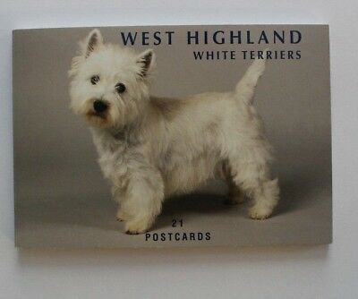 West Highland White Terriers 21 Postcards Book
