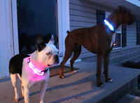 Brand New Dog Pet LED Lights Safety Night Collar