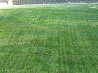 Lawn AERATION Workers Needed Starting this week