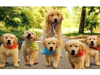 I provide a dog walking service 7 days a week, customise to your needs, pets sitter, one day or more
